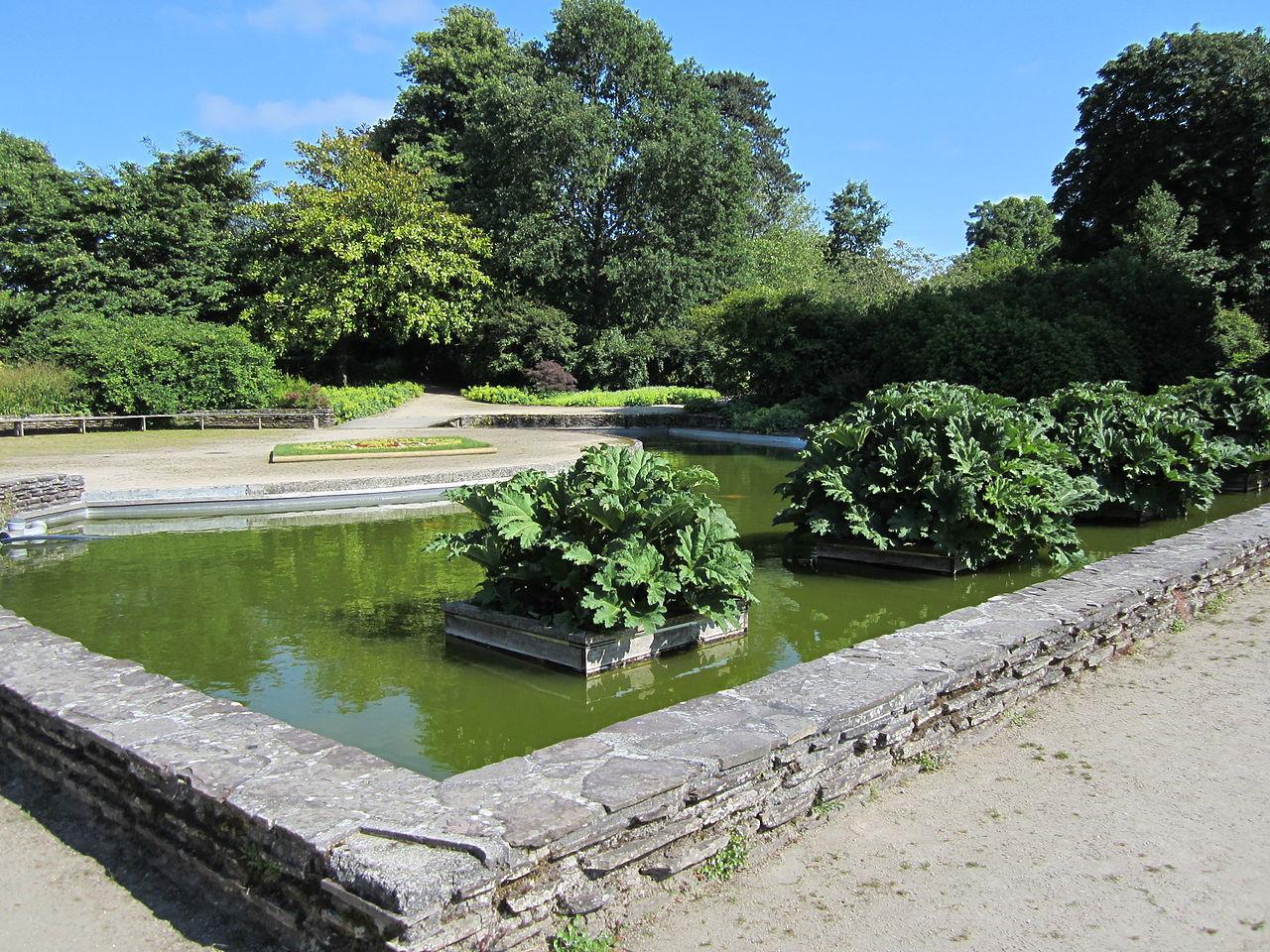 File:Jardin des plantes d'Avranches - bassin des Gunneras ...