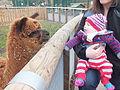 Jesmond Dene Pet Alpacas 1132.JPG
