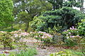 John McLaren Memorial Rhododendron Dell - Golden Gate Park, San Francisco, CA - DSC05362.JPG