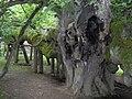 Kamenice nad Lipou, zámecký park, památná lípa (02).jpg