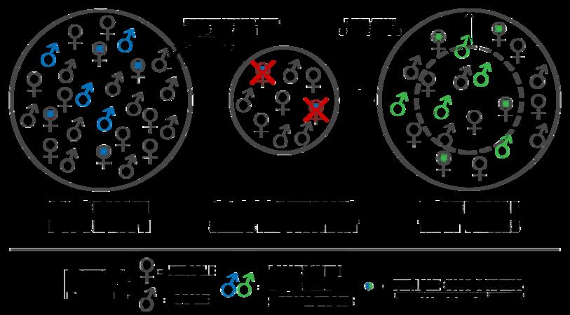 Kaneshiro Peripatric Speciation (process).png