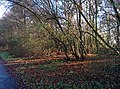 Kapellen-freudenberg-l418-weg-wuppertal-tobefree-20151127-115806.jpg