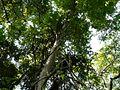 Karnala Bird Sanctuary (2977760653).jpg