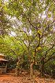 Kasturba Rd, Matheran, Maharashtra 410102, India - panoramio (95).jpg