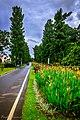 Kebun Raya Bogor 24.jpg