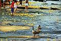 Ken-Ducky Derby 2009.jpg
