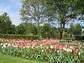 Keukenhof Garden (60).JPG