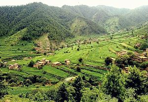 Tirah - The Tirah Valley is verdant.