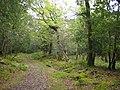 Killarney National Park - geograph.org.uk - 260401.jpg