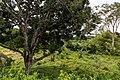 Kimanis Sabah Colony-Ellena-10.jpg