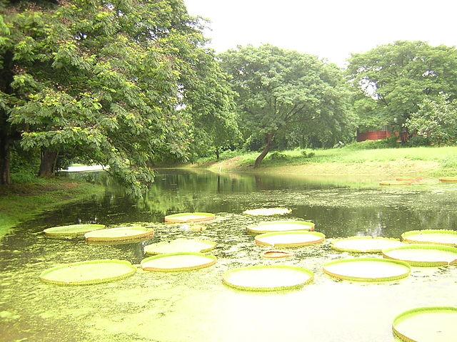 Jardín Botánico de Calcuta