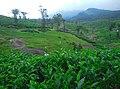 Kollengode South, Kerala, India - panoramio (13).jpg