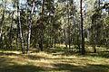 Kuzminki park 19.08.2012 1.jpg