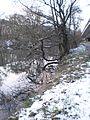 Lahnufer mit Schnee unterhalb B3-Stadtautobahn Marburg mit gegenläufiger Baumspiegelung im Fluss Lahn, 17. Januar 2017.jpg