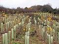 Landscaping near Egger's - geograph.org.uk - 617824.jpg