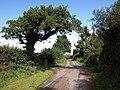 Lane to Uppacott Cross - geograph.org.uk - 1478041.jpg
