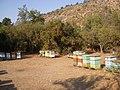 Las Canteras. - panoramio (3).jpg