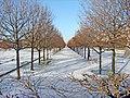 Le jardin des Tuileries sous la neige, Paris 2010.jpg