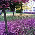 Leaves - panoramio (3).jpg