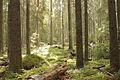 Liesjarvi national park.jpg