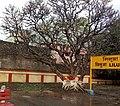 Liluah railway station IMG 20200305 082730 1.jpg