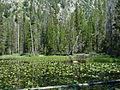 Lily Lake (14871860608).jpg