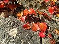 Lindenhof (Rapperswil) 2012-10-30 15-10-47 (N8).jpg