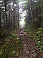 Long Trail.jpg