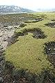 Looking west across Glas Eilean - geograph.org.uk - 1202930.jpg