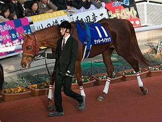 Lucky Lilac Japanese Thoroughbred racehorse