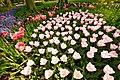 M^m Flores en el parque en la Haya - Creative Commons by gnuckx - panoramio (17).jpg