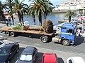 Madeira - Camara De Lobos (2093415880).jpg