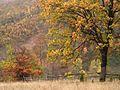 Magleš - zapadna Srbija - kanjon reke Gradac - Šuma u jesen detalj 6.jpg