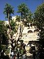 Majorque Palma Avinguda Antoni Maura Almudaina Jardin - panoramio.jpg