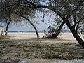 Mamaia - panoramio (5).jpg