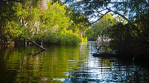 Amazon-Orinoco-Southern Caribbean mangroves - Morrocoy National Park