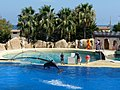 Marineland Antibes, Antibes - Frankrijk - panoramio (5).jpg