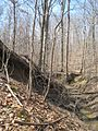 Meeman-Shelby Forest State Park Shelby County TN 2014-02-23 010.jpg
