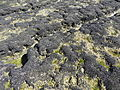 Mejillones punta Cuevas (141).JPG