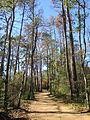 Mercer Arboretum, 2012, unpaved trail.JPG