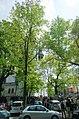 Mińsk Mazowiecki ul. Ogrodowa. Widok na biały kościół NNMP - panoramio.jpg