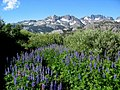 Minarets past lupines from High Trail.jpg