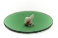 Miniatyrhäst av elfenben på oval, grön glasplatta - Skoklosters slott - 92175.tif