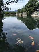 Moat of Hiroshima Castle with koi.jpg