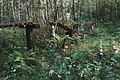 Moscow, ruins of a footbridge in Losiny Ostrov forest (21061192099).jpg