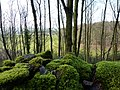 Mossy wall with leaves - geograph.org.uk - 1612153.jpg