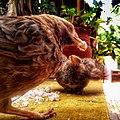 Mother bird and child.jpg