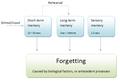 Multi-store-diagram(psychology).png