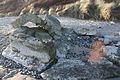 Murlough Beach, County Down, January 2012 (04).jpg