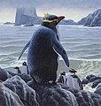 Murtha Penguin sm 800.jpg